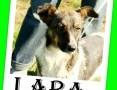 11kg,średnia,radosna,łagodna,rodzinna suczka LARA.Adopcja,  mazowieckie Warszawa