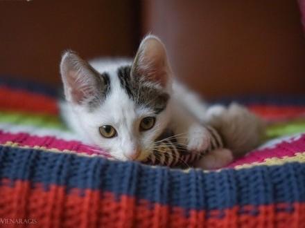 Malutki Momo do adopcji   śląskie Gliwice
