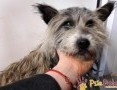 'SZCZOTUŚ-Mały brudny długowłosy psiak szuka kochającego domu