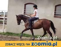konie sportowe