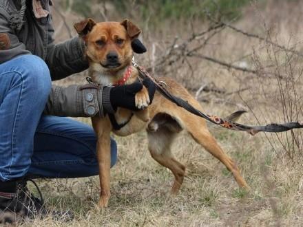 Rico-młodziutki, przyjacielski, nieduży psiak szuka domu
