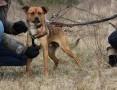'Rico-młodziutki, przyjacielski, nieduży psiak szuka domu