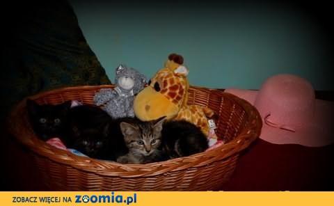 Rozkoszne kociaki rozglądają się za domkiem na zawsze