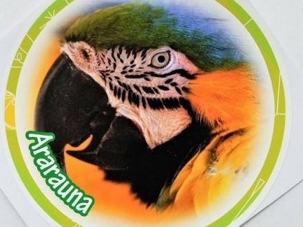 Naklejka okrągła papuga ararauna 12 5 cm