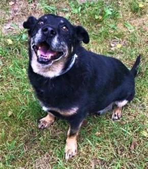 KABANOS - pies wyjątkowy, kocha ludzi, dzieci do adopcji,  mazowieckie Warszawa