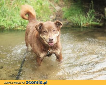 Karmel - słodki pies szuka domu