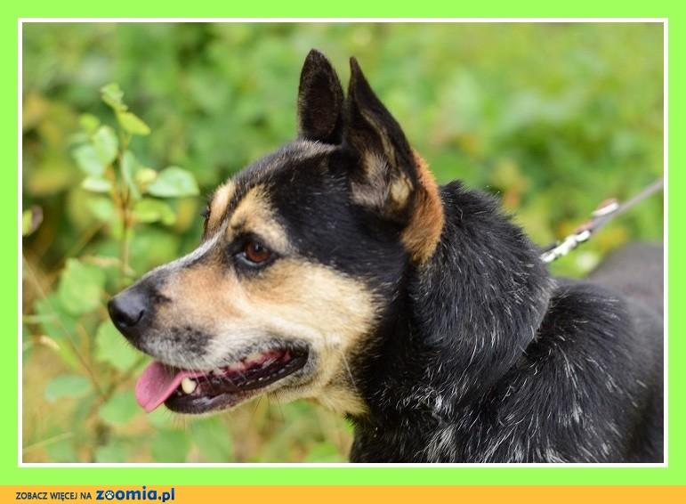 Średni 15 kg,kontaktowy, sympatyczny,łagodny psiak ARES_Adopcja_