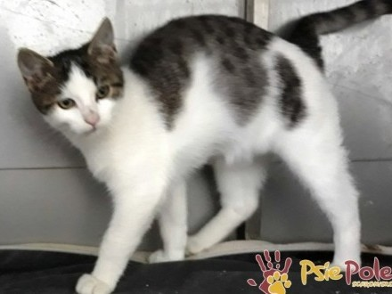 DŻERESEJEK-super kochany  piękny  wspaniały mały kotek-szukamy domu