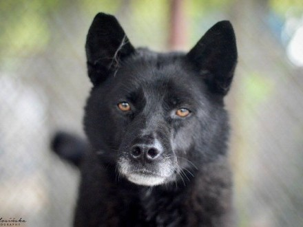 Ministrant  super czarny psiak szuka domu!