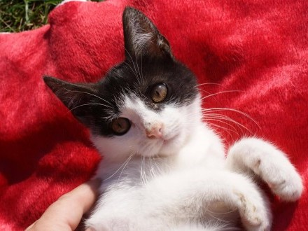 5 miesięczny kociak Kitol szuka domu!