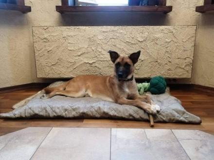 RYSIO młody energiczny psiak szuka PILNIE kochającego i odpowiedzialnego domku na zawsze
