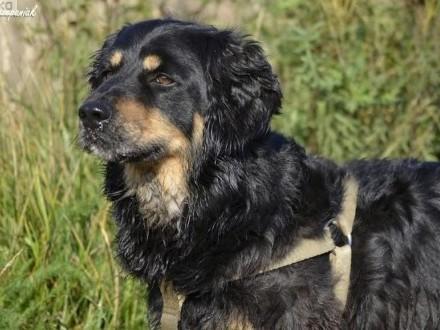 Gordon - pies z mocnym charakterem szuka domu
