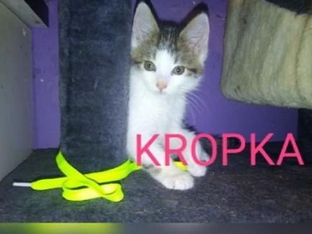 Mała kotka Kropka szuka domu   łódzkie Łódź
