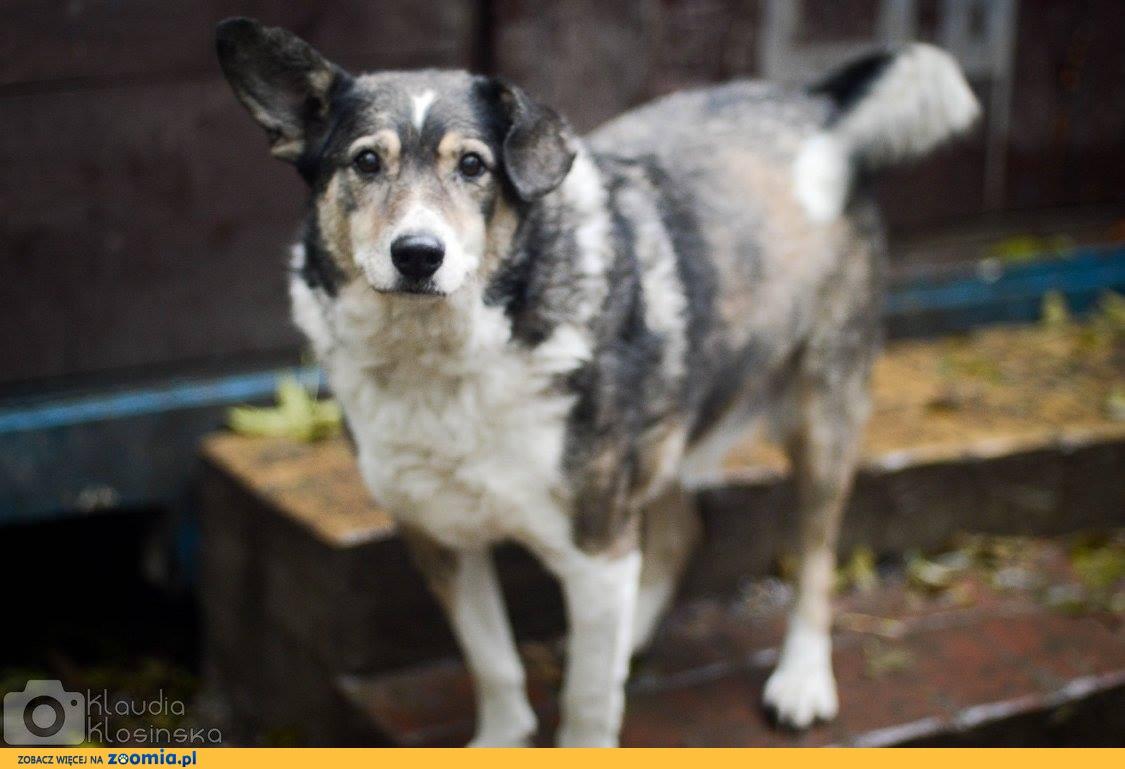 Wesoły, zakochany w ludziach Oskar, pozytywny psiak szuka domu!