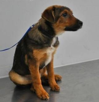 Trzy 5 miesięczne szczeniaki wyrzucone do rowu szukają domów PILNE   mazowieckie Warszawa