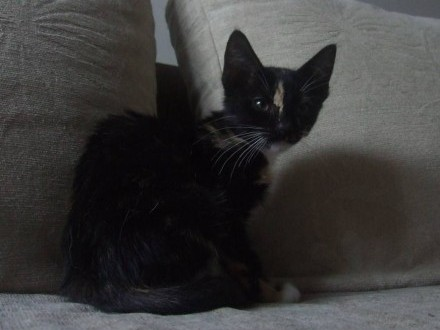 Koteczka Aria szuka domu