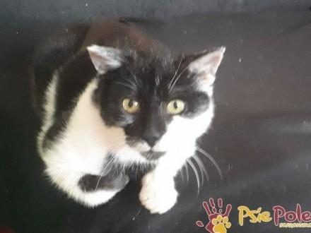 MAGICZNY kotek MAGOTEK-szukamy troskliwego domu  adopcja