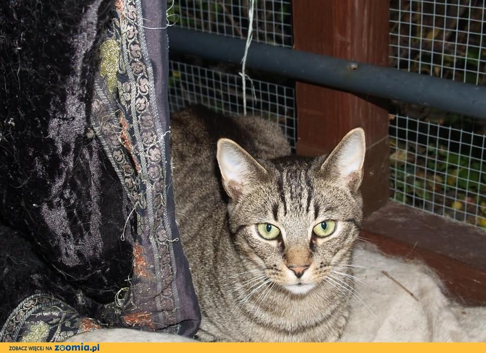 Nurek, prawdziwy kot, zamieszka w Twoim domu!