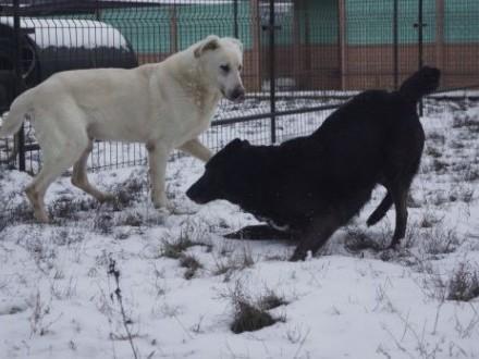Biały  fantastyczny pies szuka domu