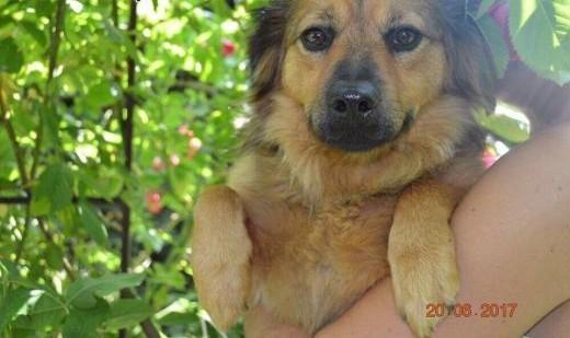 Bruno  chodzący IDEAŁ  cudowny  niewielki psiak szuka domu!   Kundelki cała Polska