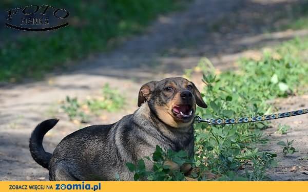 pies idealny dla calej rodziny szuka domku