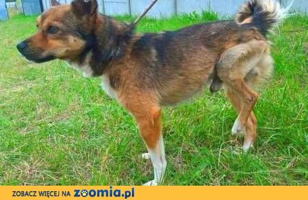 GRYZEK - mały, biedny psiak załamuje się w schronisku,  mazowieckie Warszawa