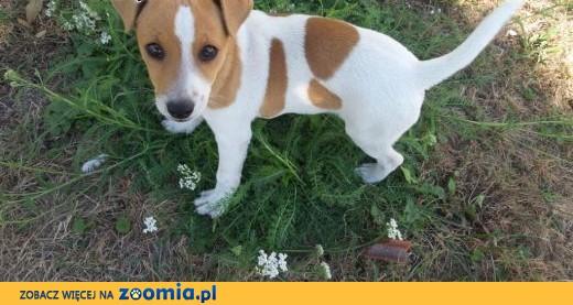 Skradziono psa z gminy Żórawina,  dolnośląskie Wrocław