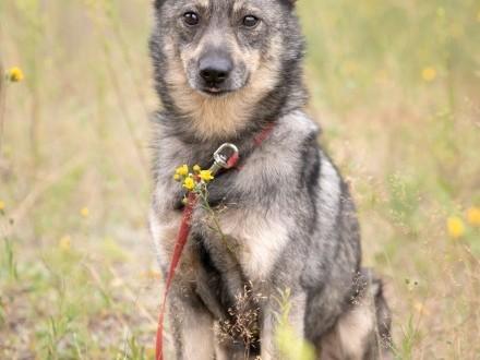 Serwus! Uroczy mini wilczek czeka na miłość!