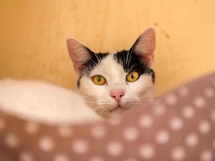 Śnieżek, przyjazny, towarzyski kotek szuka domu!