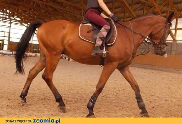 Wymienię małego konia na dużego konia
