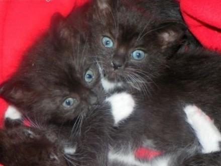 Maluszki kotki zdrowe z książeczkami szukają domów    mazowieckie Warszawa