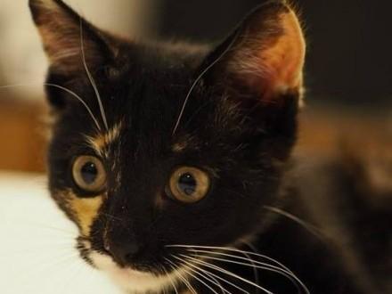 Szukamy domu dla ślicznej kotki o imieniu Suzi