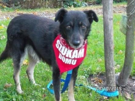 FART - łagodny  spokojny pies szuka domu! Chętnie z kocim towarzystwem!   mazowieckie Warszawa