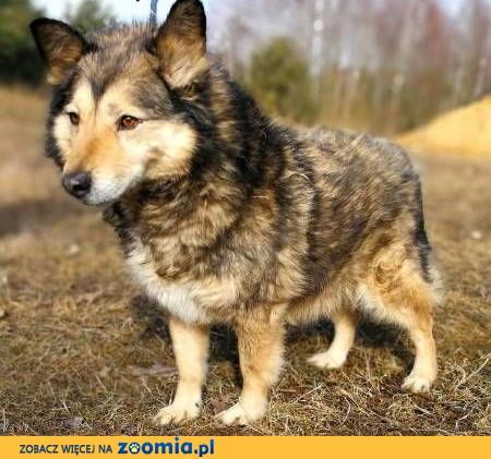 MOLIER - kochany, zagubiony psiak, od kilka lat marnuje się za kratami...,  mazowieckie Warszawa