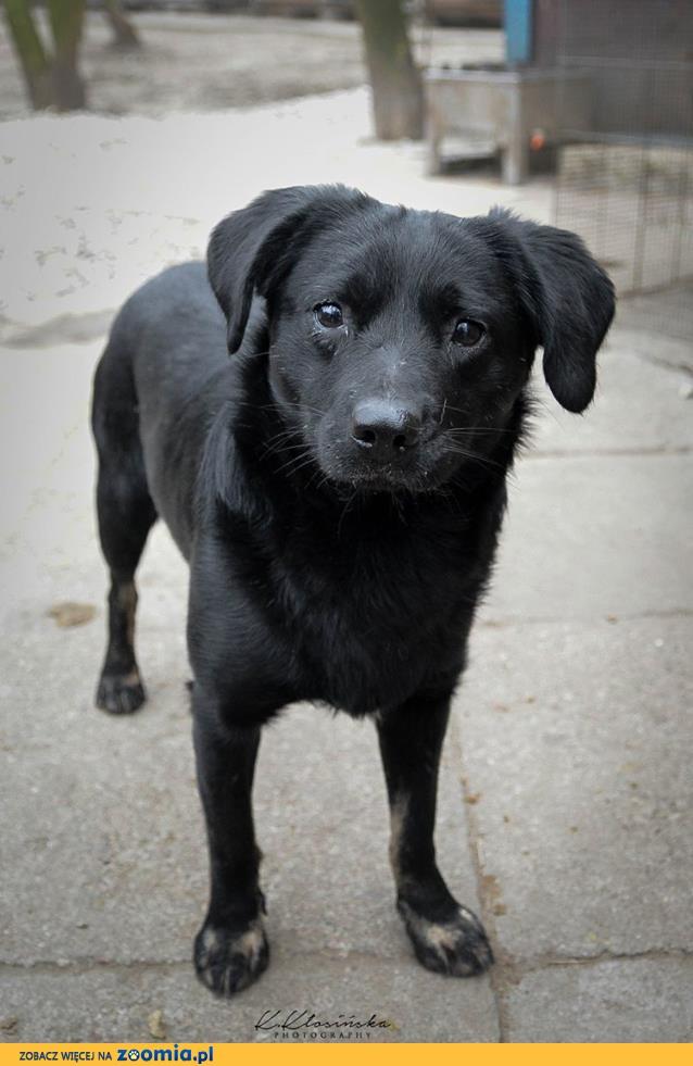 Młodziutki Funio, niekonfliktowy wesołek, niewielki psiak szuka domu!