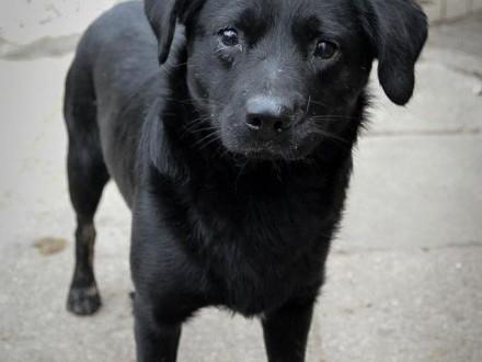 Młodziutki Funio  niekonfliktowy wesołek  niewielki psiak szuka domu!