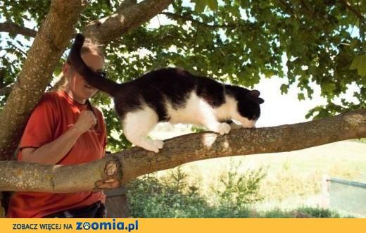 Pendolino - cudowna koteczka :),  warmińsko-mazurskie Olsztyn