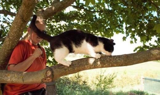 Pendolino - cudowna koteczka :)   warmińsko-mazurskie Olsztyn