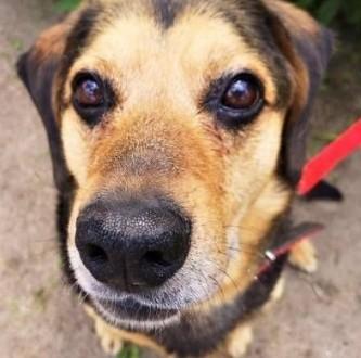 SAMI - kochany  spokojny psiak szuka dobrego domu