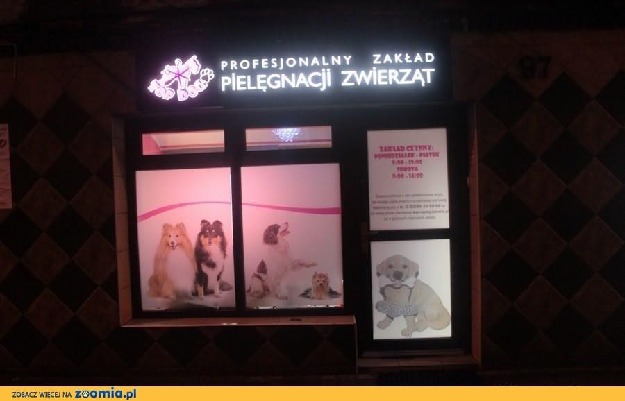 Psi fryzjer TopDog Strzyżenie Trymowanie psów