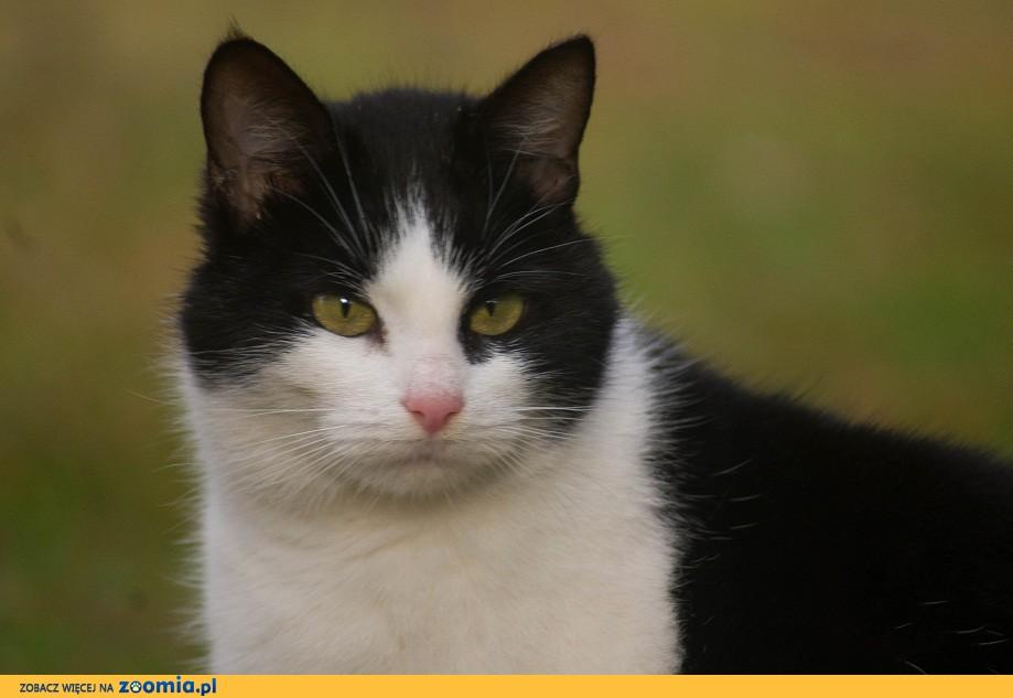 3 letnia kotka Prusia szuka domu