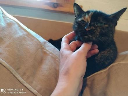 Haga - kocia dama do adopcji :-)