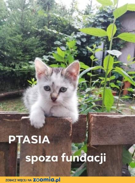 Koteczka Ptasia szuka domu