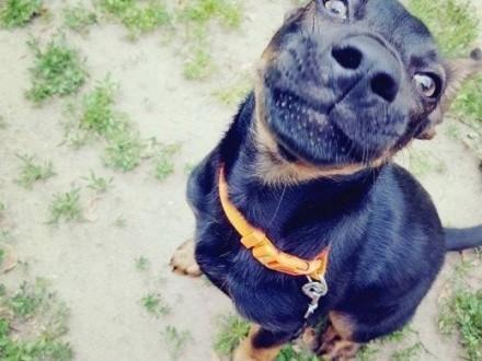 Joga - 4 miesięczna psia królewna szuka swojego domku!   mazowieckie Warszawa