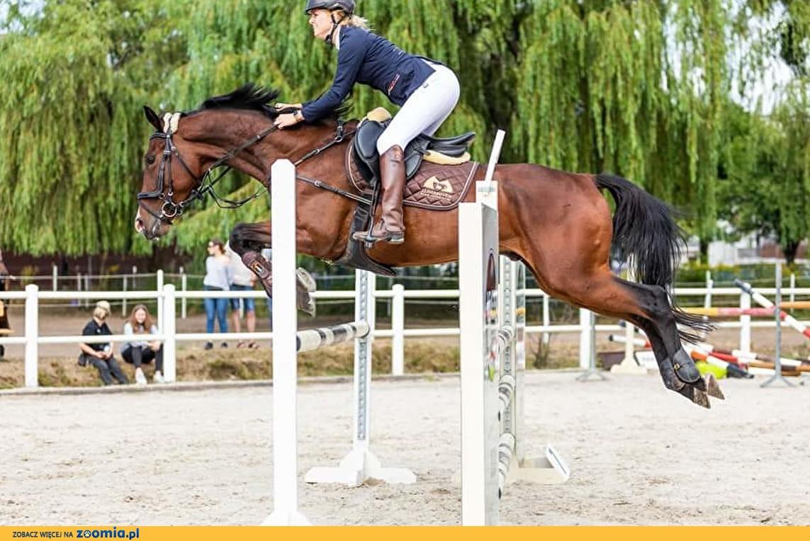 Współdzierżawa konia
