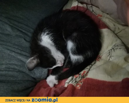 Koteczka Kita szuka domu