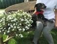 Bambusek, 10 miesięczny wesoły psiak szuka domu!