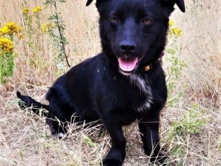 KOFIŚ - mały  kochany  przerażony schroniskiem psiak szuka domu   mazowieckie Warszawa