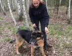 Piasek, energiczny psiak w typie OWCZARKA do adopcji