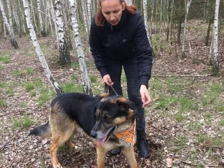 Piasek  energiczny psiak w typie OWCZARKA do adopcji